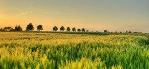 Enna: il 5 aprile incontro sui finanziamenti a fondo perduto Inail in agricoltura
